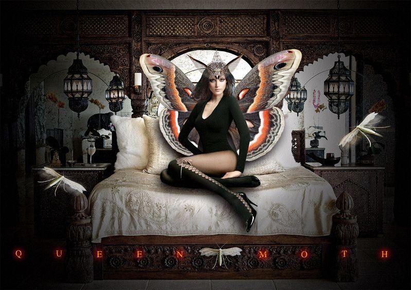 Queen Moth