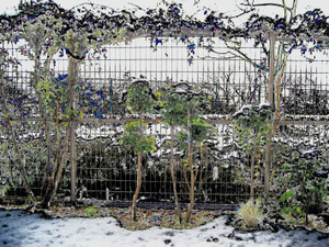 Snow_scene_from_my_garden_3_3
